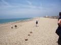 beach 2 (18).JPG