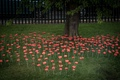 Poppies-13.jpg