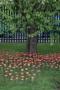 Poppies-14.jpg