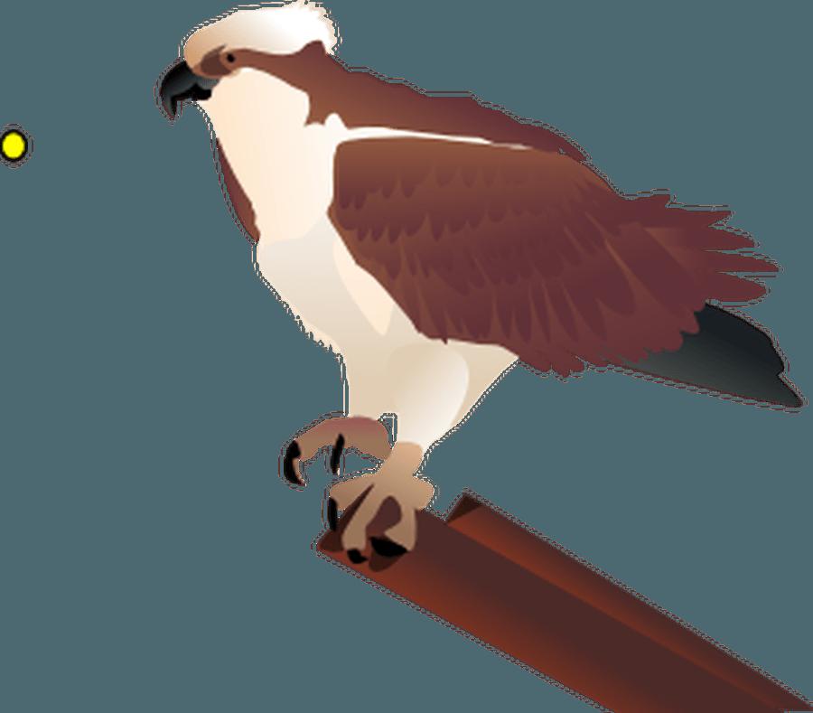 Osprey Y5
