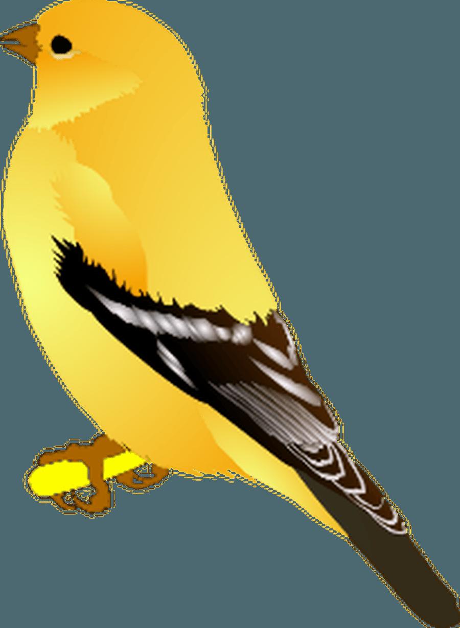 Finch Y3