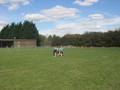 tag rugby (26).JPG