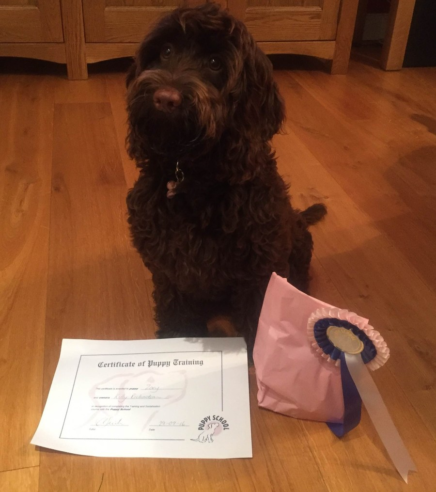 "Zoey graduating from Puppy School.""Well done."""
