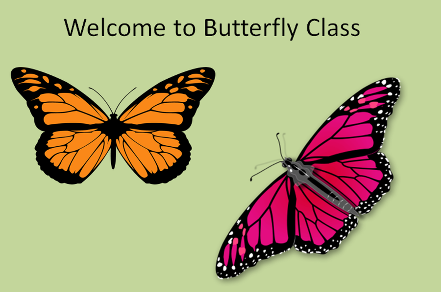 Image result for butterfly class
