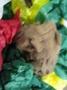 animals that hibernate (42).JPG