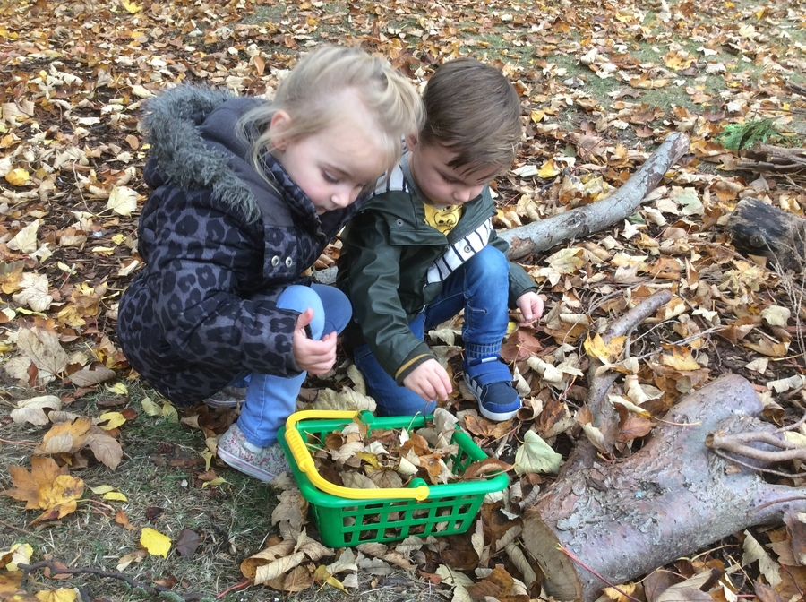 The children were collecting and  investigating leaves. This highlights growth and decay and time passing as well as looking at size colour, shape and texture.