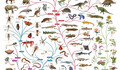 Charles Darwin tree of life poster.jpg