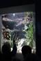 aquarium17.JPG