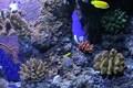 aquarium18.JPG