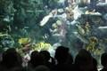aquarium19.JPG
