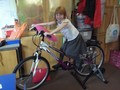 Pedalling the smoothie bike to make fruit smoothies in Design Technology (8).jpg