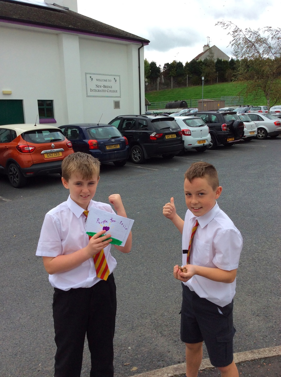 Lewis and Daniel bring some crocus corms to Newbridge College