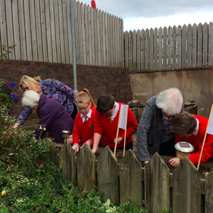 Mrs Davis and some P.7 pupils help residents plant some crocus corms in the communal gardens in Spelga Mews