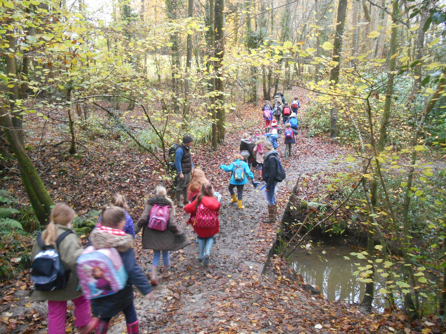 Woodland Day with Kingfishers