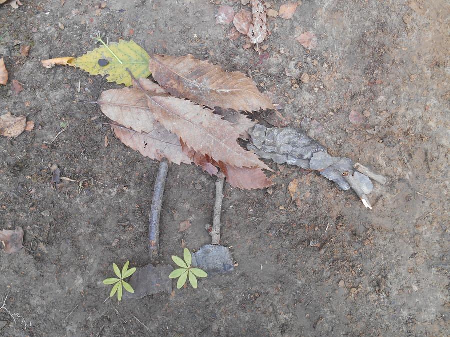 Skylark nature collage
