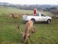reindeer14.jpg
