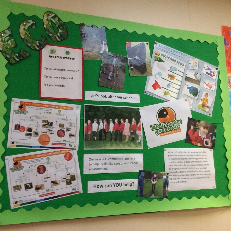 Our eco notice board
