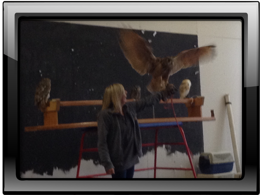 In assesmbly we had a visit from some owls!