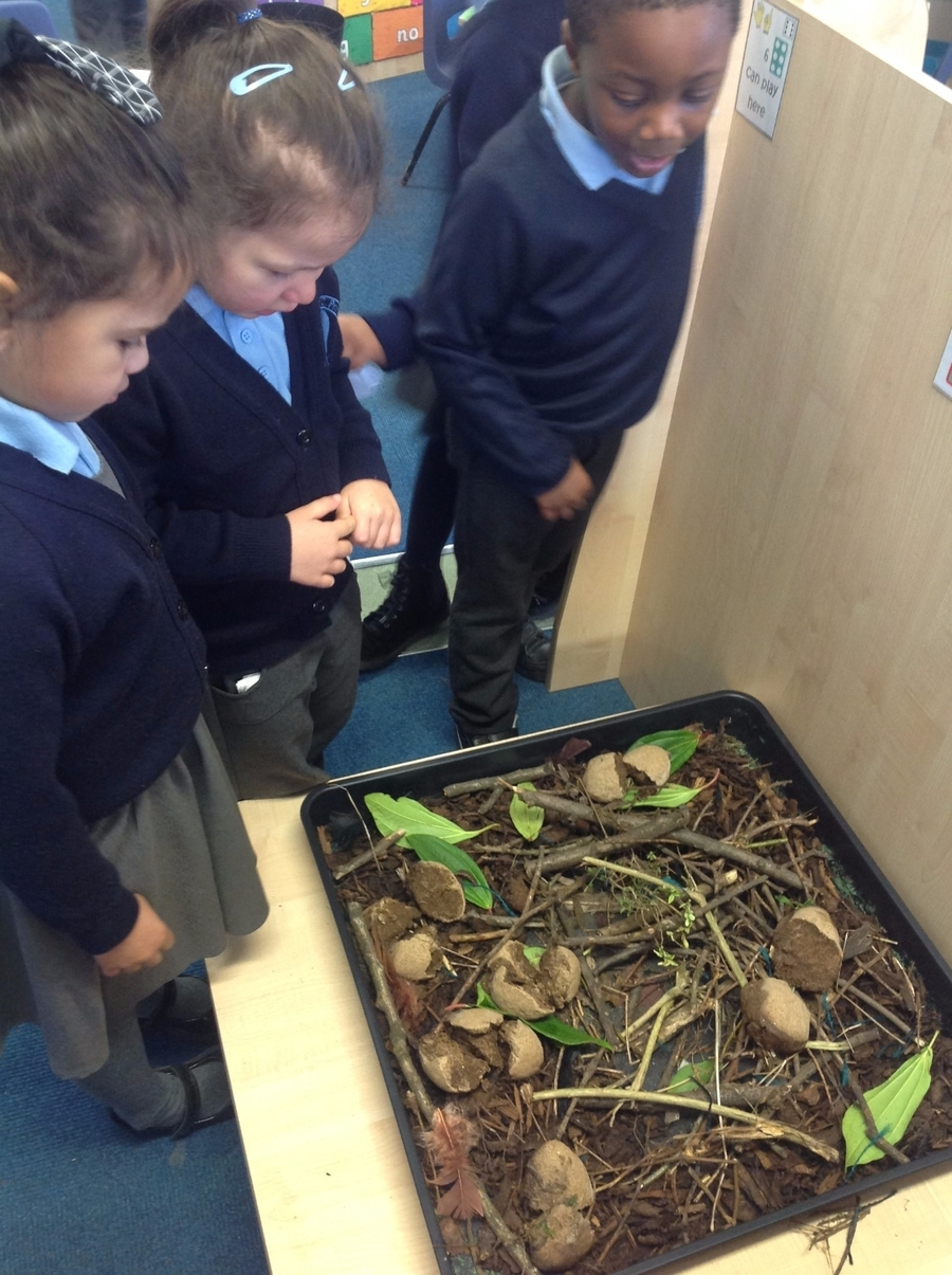 One morning when we arrived at school our eggs had hatched but there were no baby dinosaurs! Only a trail of leaves leading to the door. Where could they be?