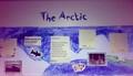 arctic (1).JPG
