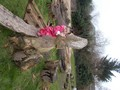 Triangles forest school feb 17 027.jpg