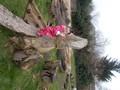 Triangles forest school feb 17 027.jpg