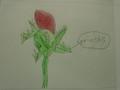 science roses (7).JPG