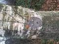more tree spirits.jpg