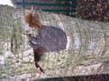 Tree Spirits 2.jpg