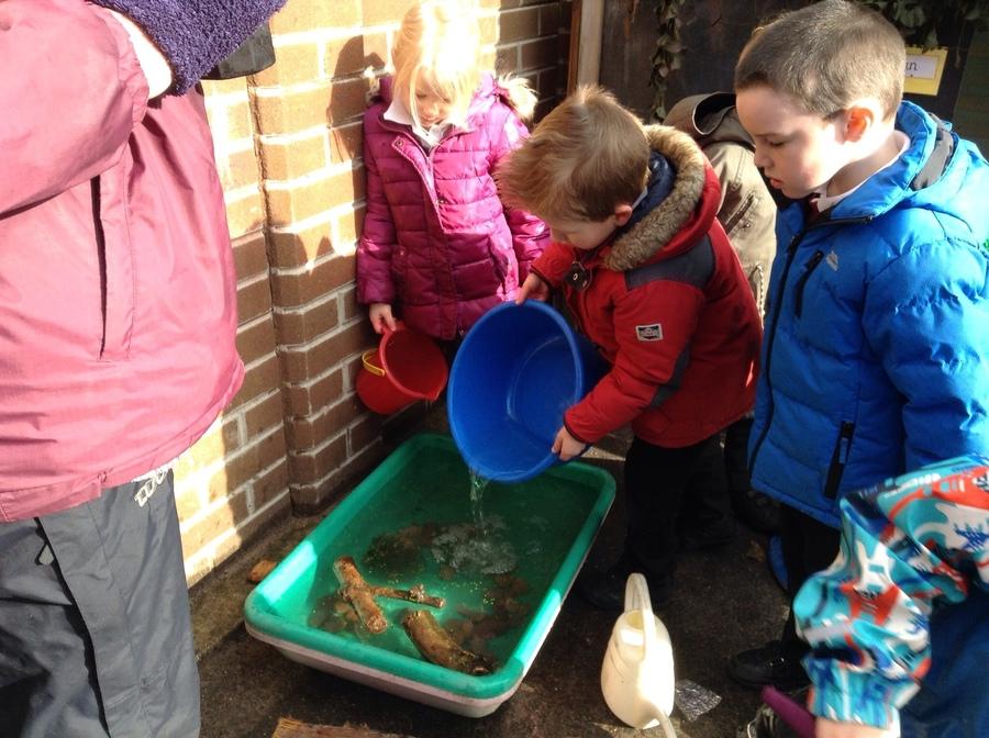 Building a suitable environment for the tadpoles.