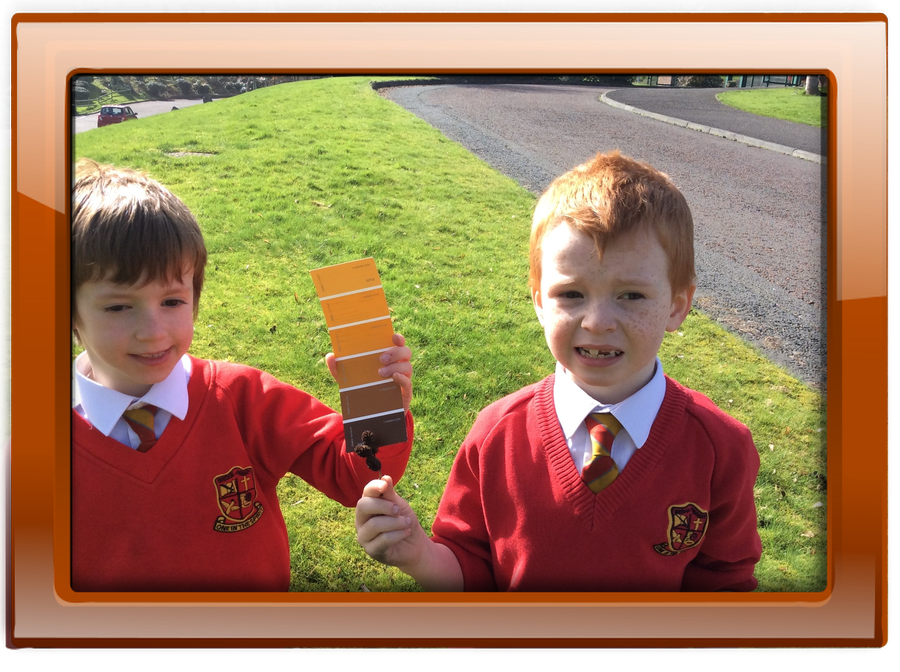 Finn and Lucas have found a seed which is the same colour as the brown on their paint card.  Good matching boys!