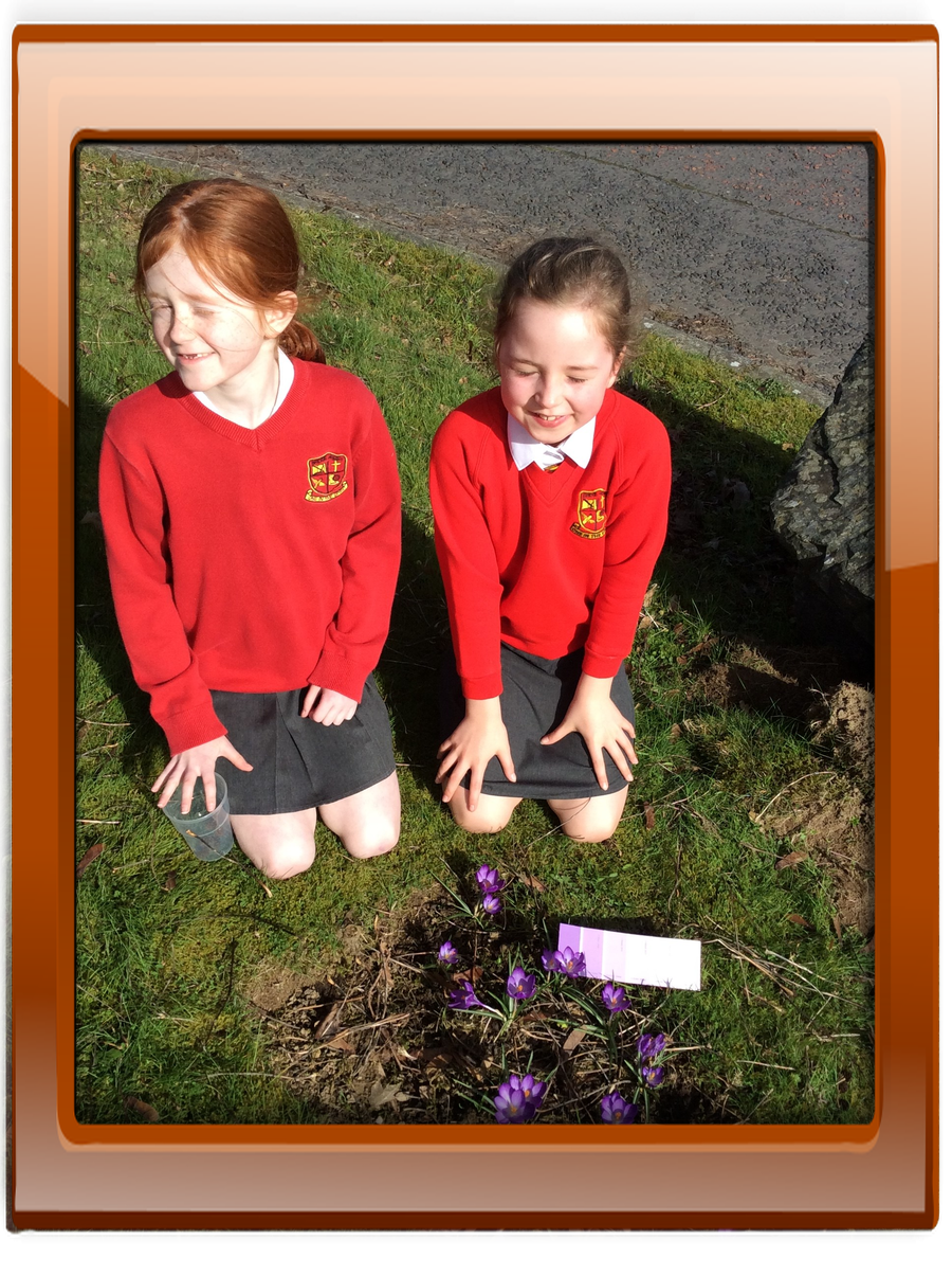 Katie and Rihanna spotted our Purple for Polio crocuses.  They match the purple colour on their card.