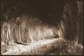 Gildersome_Tunnel5-1.jpg