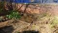 pond day 1-2.jpg
