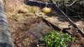 pond day 1-5.jpg