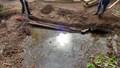 pond day 2-2.jpg