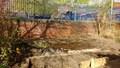pond day 2-4.jpg