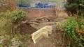 pond day 3-5.jpg