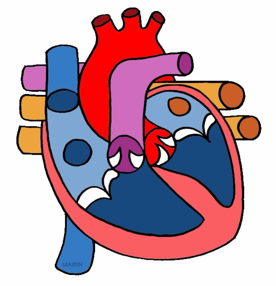 Click on image above to read more about the circulatory sytem