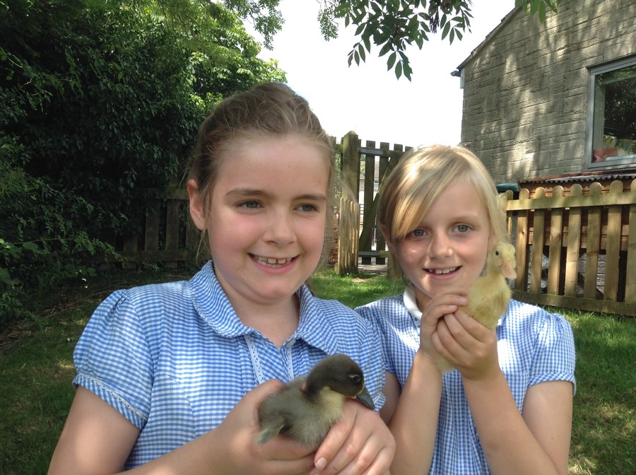 Meet our two ducklings who hatched in July 2016
