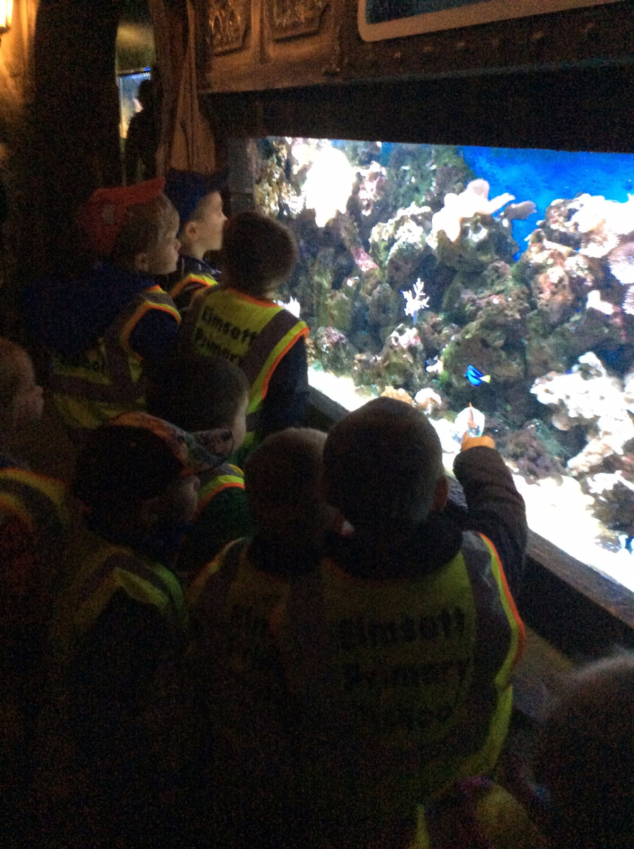 This term Otters and Hedgehogs are going to be learning all about the ocean. As a start to the topic, the children had a trip to the Sea Life Centre in Great Yarmouth. Click here to see more!
