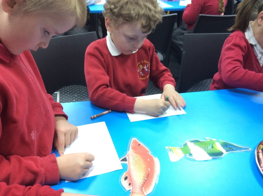 We discovered that fish come in many shapes and colours.