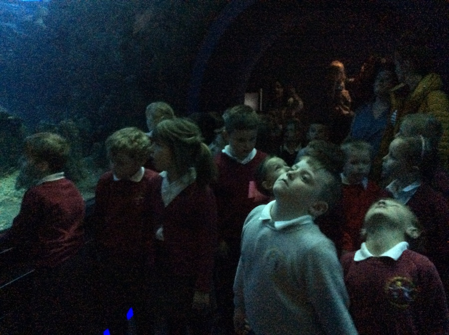 In the tunnel we were surrounded by sea creatures