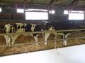 farm trip 058.JPG