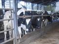 farm trip 061.JPG