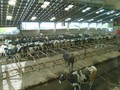 farm trip 062.JPG