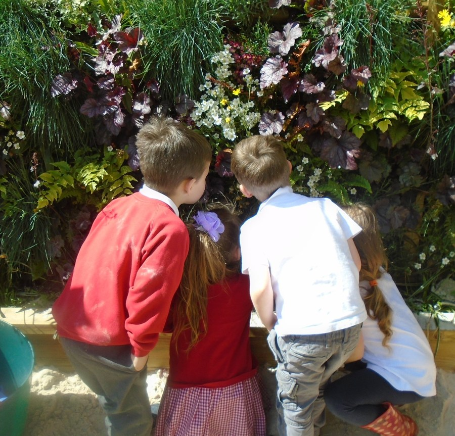 Exploring the living wall