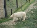 Yorkshire wildlife park 2017 Mr Baird 069.JPG