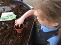 pushing the seed down into the compost