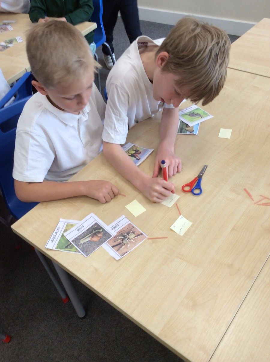 To start with, we looked at similarities and differences between the animals that we were planning to sort.